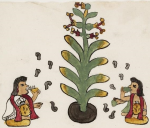 Codex Tudela, codex aztèque du milieu du XVIe siècle, Museo de America, Madrid